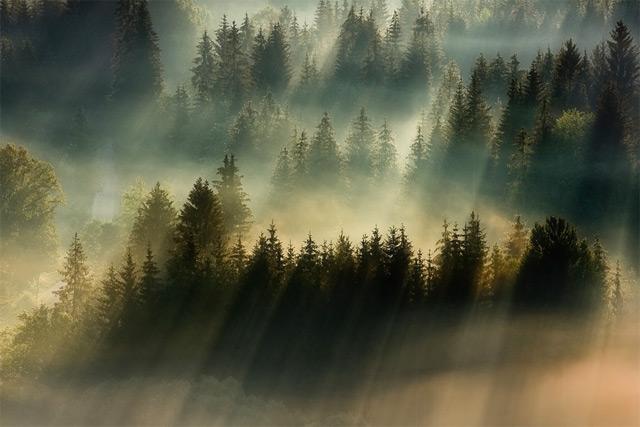 驚愕!透き通るような光のカーテンが美しすぎる。